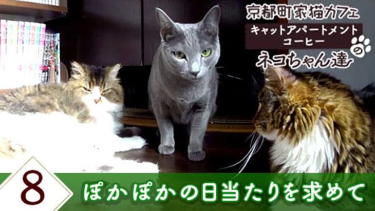 VR動画:#8 ぽかぽかの日当たりを求めて / 京都町家猫カフェ キャットアパートメントコーヒー