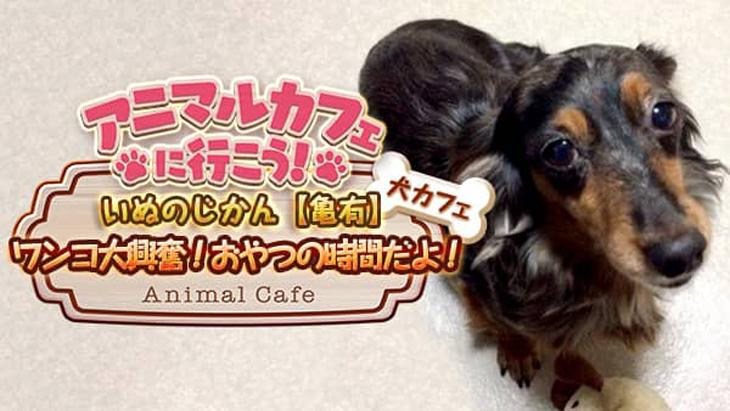 VR動画:【犬カフェ】いぬのじかん②大興奮!おやつの時間だよ!