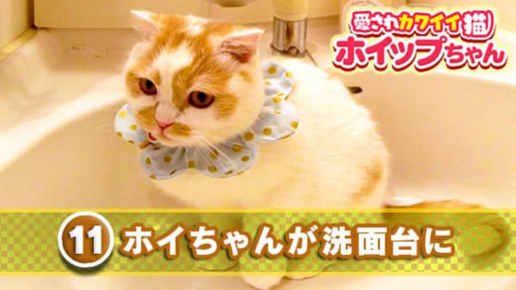 VR動画:#11 ホイちゃんが洗面台に / 愛されカワイイ猫ホイップちゃん