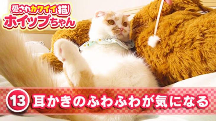 VR動画:#13 耳かきのふわふわが気になる / 愛されカワイイ猫ホイップちゃん