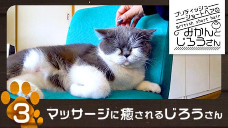 VR動画:#3 マッサージに癒されるじろうさん / ブリティッシュショートヘアのみかんとじろうさん