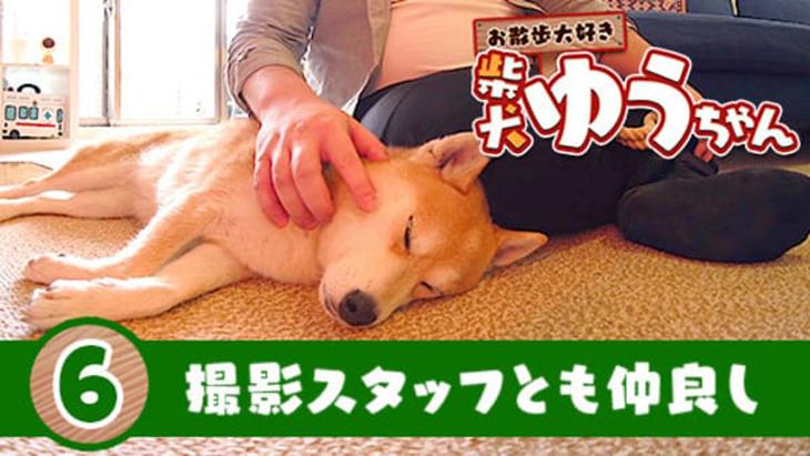 VR動画:#6 撮影スタッフとも仲良し / おさんぽ大好き 柴犬ゆうちゃん