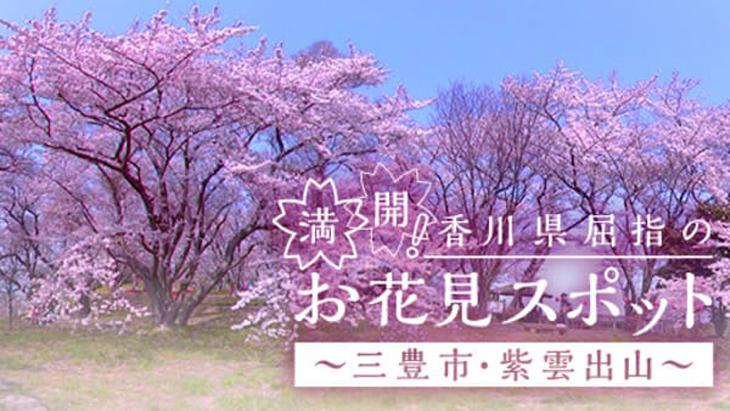 VR動画:満開!香川県屈指のお花見スポット ~三豊市・紫雲出山~