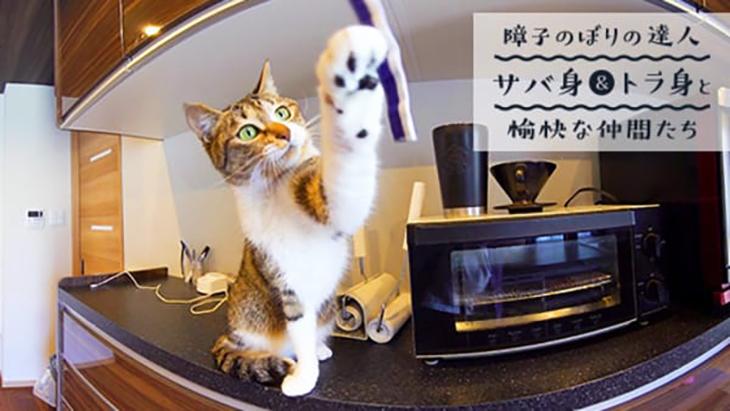 VR動画:#3 ゆらゆら動く紐に猫パンチ! / 障子のぼりの達人サバ身&トラ身と愉快な仲間たち