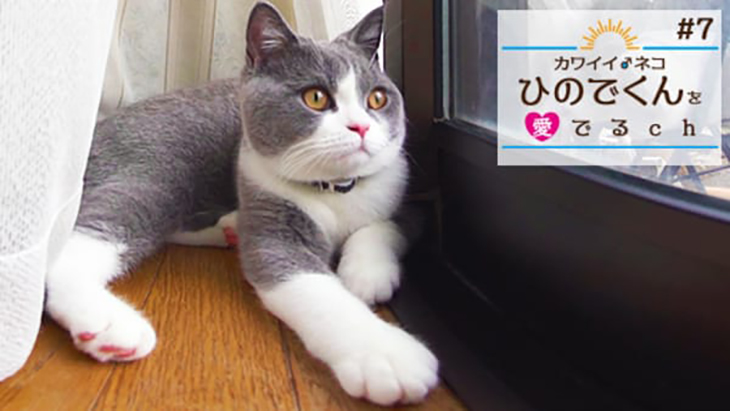 VR動画:#7 カーテンの裏で休憩 / カワイイ♂ネコ ひのでくんを愛でるCh(ちゃんねる)