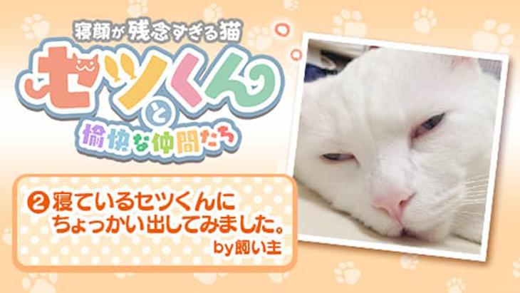 VR動画:#2 寝ているセツくんにちょっかい出してみました。by飼い主 / セツくんと愉快な仲間たち