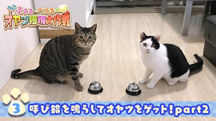 VR動画:#3 呼び鈴を鳴らしてオヤツをゲット!part2 / ぶるる・べるる