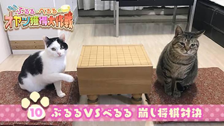 VR動画:#9 オヤツを賭けて将棋対決!のはずが… / ぶるる・べるる