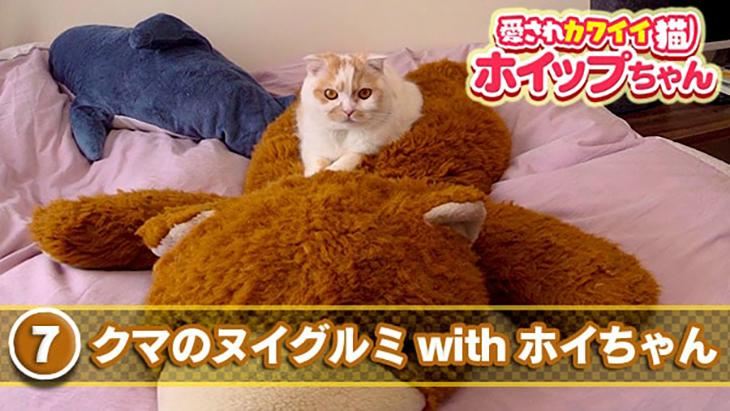 VR動画:#7 クマのヌイグルミ with ホイちゃん / 愛されカワイイ猫 ホイップちゃん