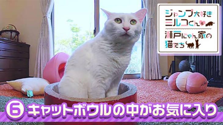 VR動画:#6 キャットボウルの中がお気に入り / ミルコくん&瀬戸にゃん家