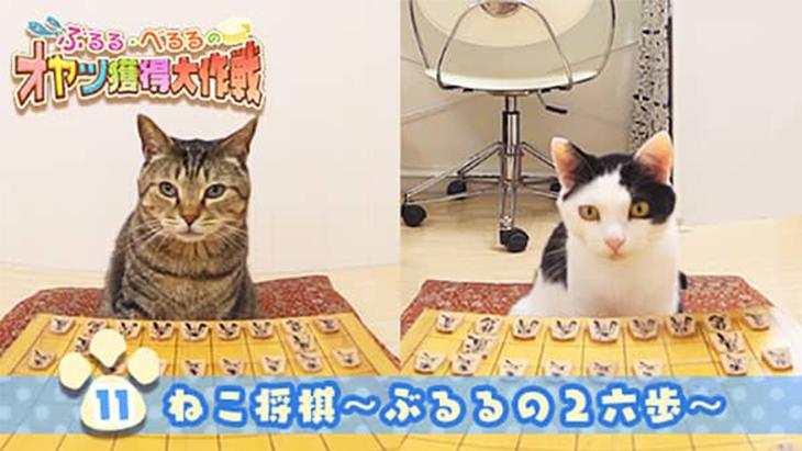 VR動画:#11 ねこ将棋~ぶるるの2六歩~ / ぶるる・べるる