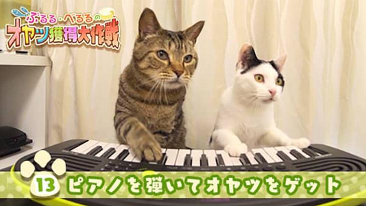 VR動画:#13 ピアノを弾いてオヤツをゲット / ぶるる・べるる