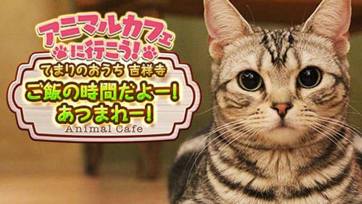 VR動画:【猫カフェ】てまりのおうち②ご飯の時間だよー!あつまれー!