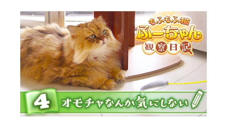VR動画:#4 オモチャなんか気にしない / もふもふ猫ふーちゃん