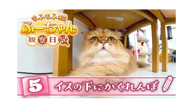 VR動画:#5 イスの下にかくれんぼ / もふもふ猫ふーちゃん