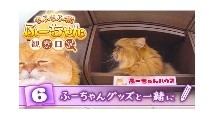 VR動画:#6 ふーちゃんグッズと一緒に / もふもふ猫ふーちゃん