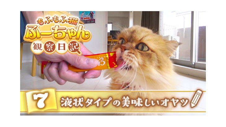 VR動画:#7 液状タイプの美味しいオヤツ / もふもふ猫ふーちゃん