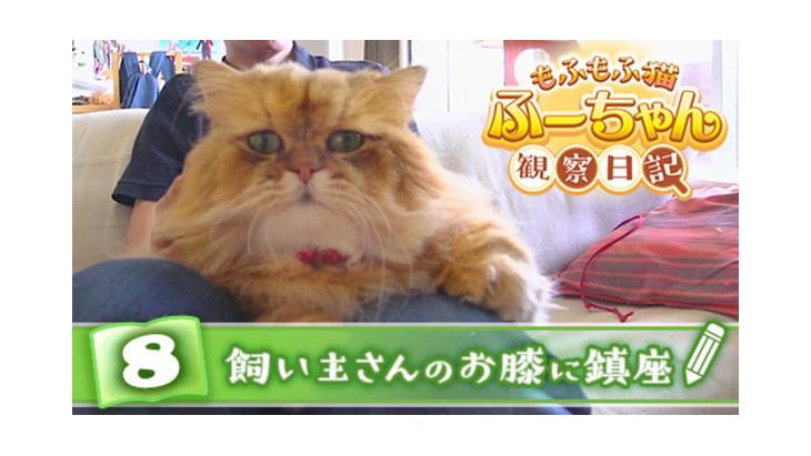 VR動画:#8 飼い主さんのお膝に鎮座 / もふもふ猫ふーちゃん