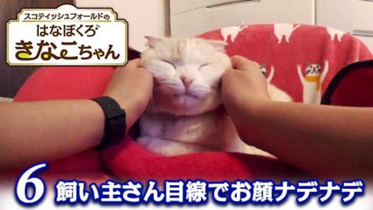 VR動画:#6 飼い主さん目線でお顔ナデナデ / はなぼくろきなこちゃん