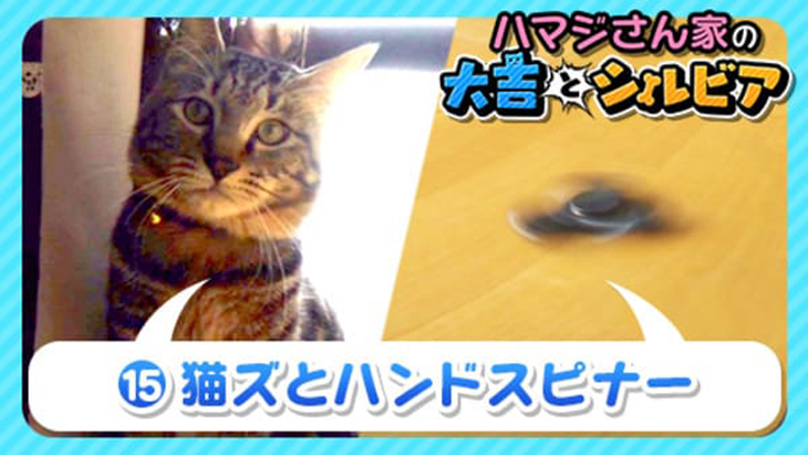 VR動画:#15 猫ズとハンドスピナー / ハマジさん家の大吉とシルビア