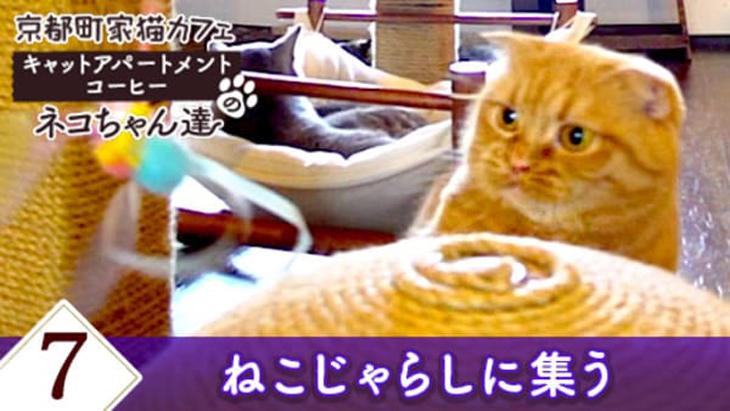 VR動画:#7 ねこじゃらしに集う / 京都町家猫カフェ キャットアパートメントコーヒー
