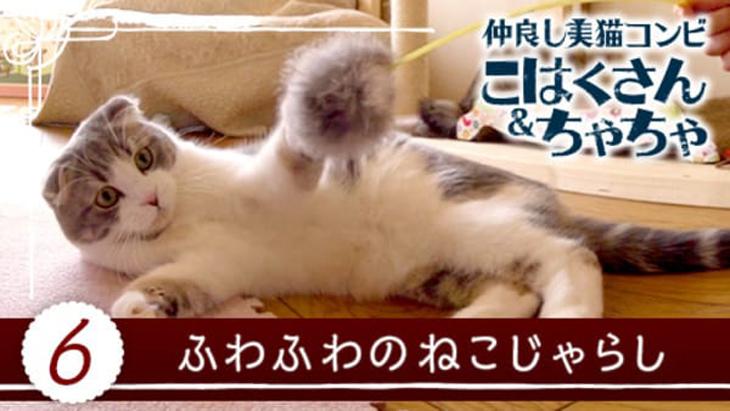 #6 ふわふわのねこじゃらし / 仲良し美猫コンビ こはくさん&ちゃちゃ