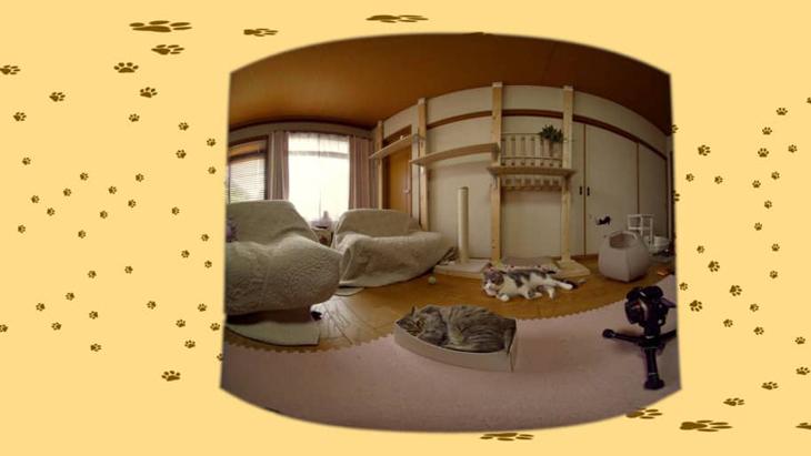 #7 箱に収まるちゃちゃ / 仲良し美猫コンビ こはくさん&ちゃちゃ ダイジェスト画像1