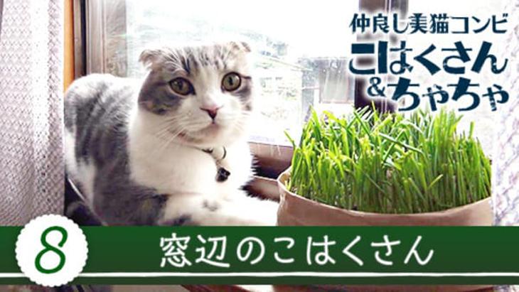 #8 窓辺のこはくさん / 仲良し美猫コンビ こはくさん&ちゃちゃ
