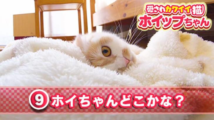 #9 ホイちゃんどこかな? / 愛されカワイイ猫ホイップちゃん
