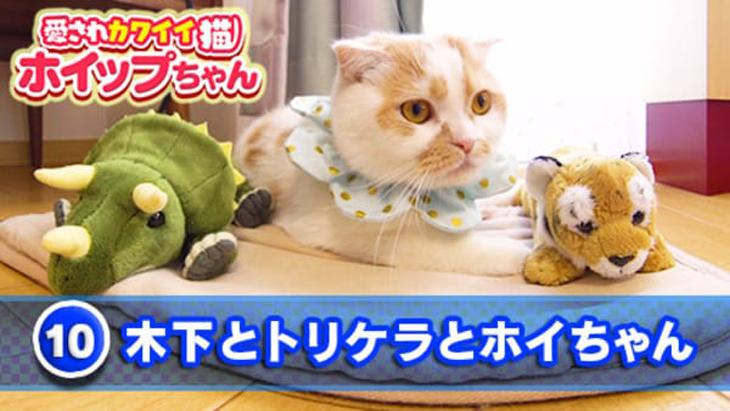 VR動画:#10 木下とトリケラとホイちゃん / 愛されカワイイ猫ホイップちゃん