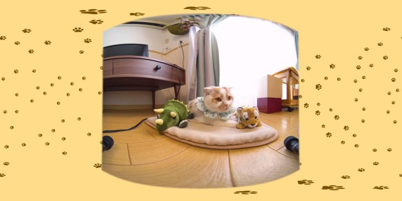 #10 木下とトリケラとホイちゃん / 愛されカワイイ猫ホイップちゃん ダイジェスト画像1
