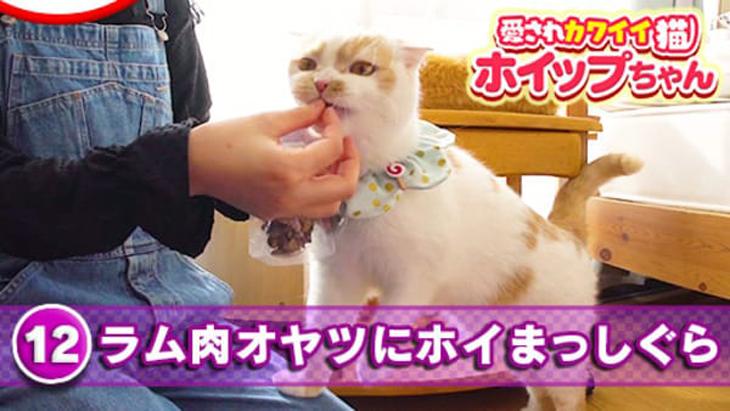 #12 ラム肉オヤツにホイまっしぐら / 愛されカワイイ猫ホイップちゃん