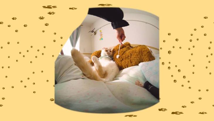 #13 耳かきのふわふわが気になる / 愛されカワイイ猫ホイップちゃん:1枚目