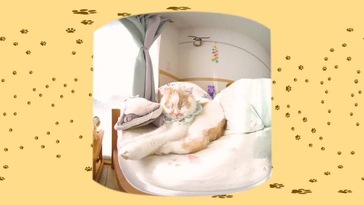#14 お昼寝ホイちゃん / 愛されカワイイ猫ホイップちゃん:1枚目