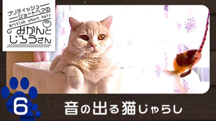 VR動画:#6 音の出る猫じゃらし / ブリティッシュショートヘアのみかんとじろうさん