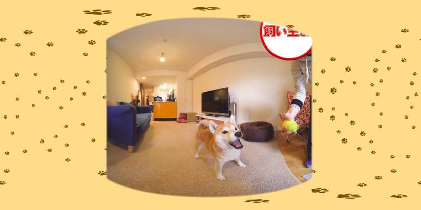 #5 飼い主さんとボール遊び / おさんぽ大好き 柴犬ゆうちゃん:1枚目