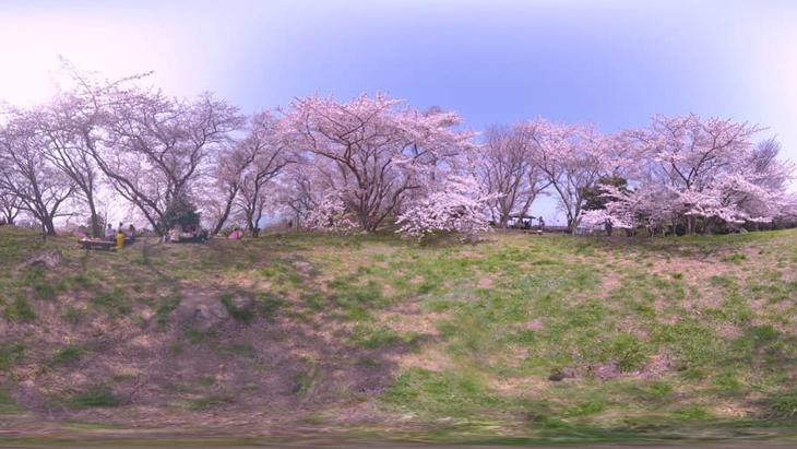満開!香川県屈指のお花見スポット ~三豊市・紫雲出山~:1枚目