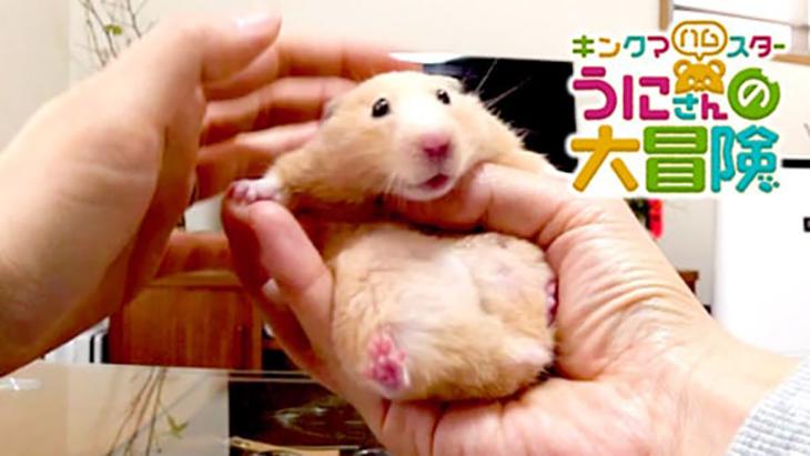 VR動画:#4 飼い主さんの手の上で / キンクマハムスターうにさんの大冒険