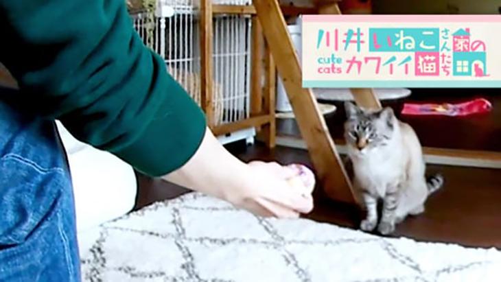 VR動画:#2 ボール遊びに夢中 / 川井いねこさん家のカワイイ猫たち