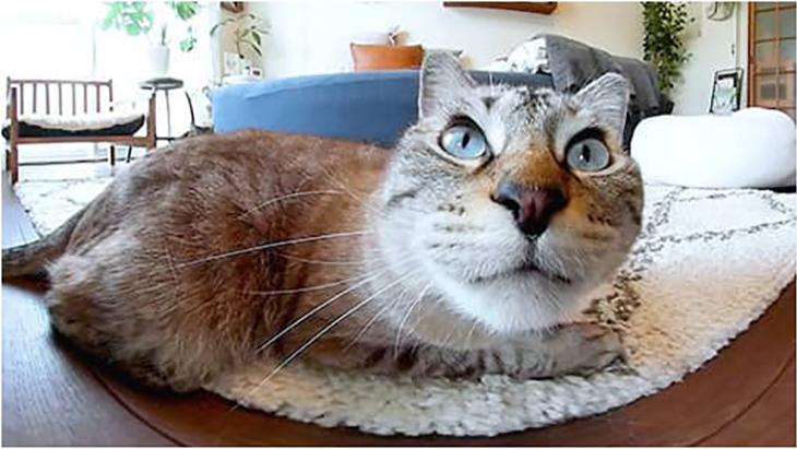 #8 絨毯の上でくつろぎタイム / 川井いねこさん家のカワイイ猫たち:1枚目