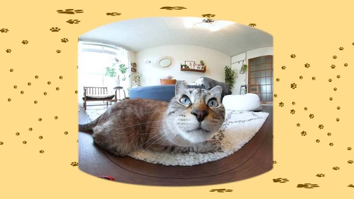 #8 絨毯の上でくつろぎタイム / 川井いねこさん家のカワイイ猫たち:2枚目