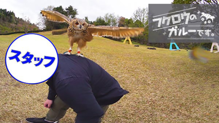 VR動画:#4 撮影スタッフの肩の上に! / フクロウのガルーです。