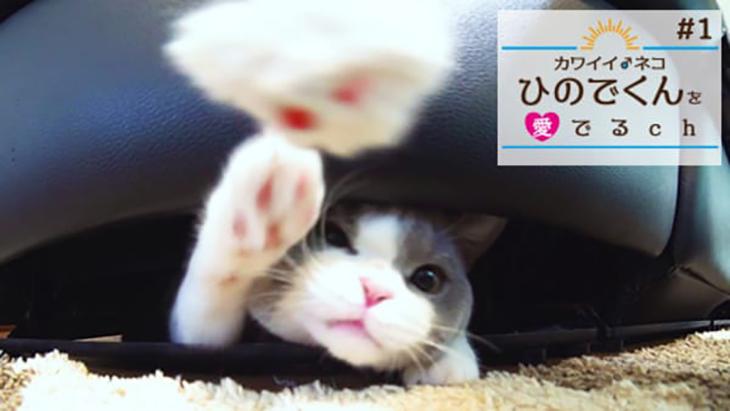 #1 ソファの下から虎視眈々と / カワイイ♂ネコ ひのでくんを愛でるCh(ちゃんねる)
