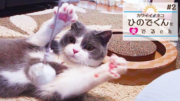 #2 ダンボールの中からひのでくん / カワイイ♂ネコ ひのでくんを愛でるCh(ちゃんねる)