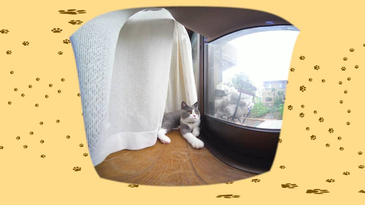 #7 カーテンの裏で休憩 / カワイイ♂ネコ ひのでくんを愛でるCh(ちゃんねる):2枚目