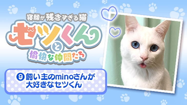 VR動画:#9 飼い主のminoさんが大好きなセツくん / セツくんと愉快な仲間たち