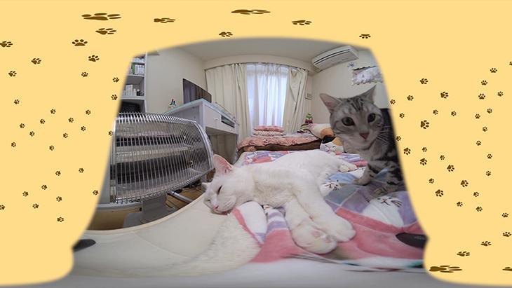 #12 セツくんの熟睡を邪魔する黒猫ヨミとアメショのコウ / セツくんと愉快な仲間たち:1枚目
