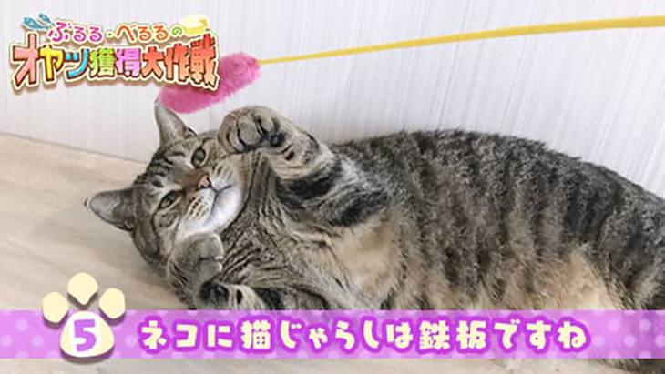 VR動画:#5 ネコに猫じゃらしは鉄板ですね / ぶるる・べるる