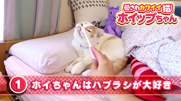 #1 ホイちゃんは歯ブラシが大好き / 愛されカワイイ猫 ホイップちゃん