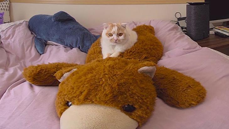 #7 クマのヌイグルミ with ホイちゃん / 愛されカワイイ猫 ホイップちゃん:2枚目